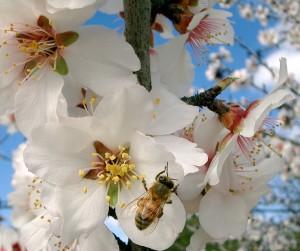 seasonal allergy symptoms
